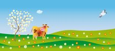 Free A Cow Admires In Spring Royalty Free Stock Images - 8430599