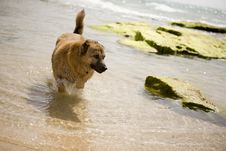 A Dog On The Seaside Stock Photos