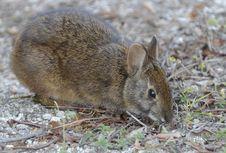 Free A Shy Bunny Royalty Free Stock Photo - 8433515