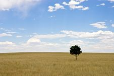 Single Tree In Wheat And Grass Field Stock Images