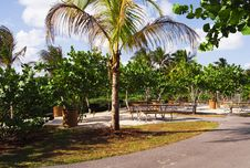Free An Empty Tropical Picnic Area Stock Photography - 8433762