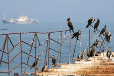 Free On A Pier Stock Photos - 8434023