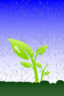 Free Plant In The Rain Stock Photo - 8436450