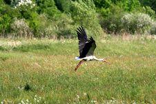 Free Stork Royalty Free Stock Image - 8437956