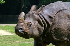 Free Rhinoceros Stock Image - 8438551