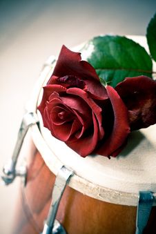 Free Red Rose On A Dhol Drum Stock Photography - 8438702