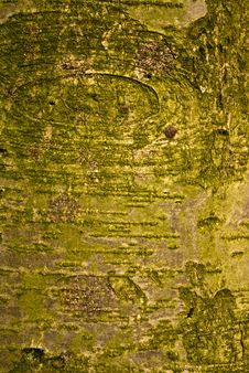 Free Tree Bark Background Stock Photos - 8438723