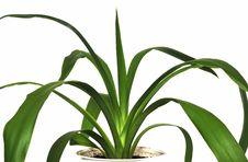 Free Green Flower Stock Photos - 8439283