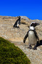 Free Penguins Stock Photography - 8443532