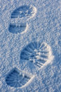 Free Footprint Stock Images - 8447594