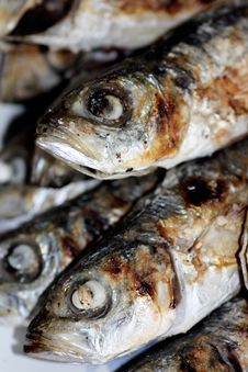 Free Grilled Sardines Stock Photos - 8440633
