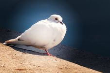 Free Bird Of World Royalty Free Stock Images - 8440659