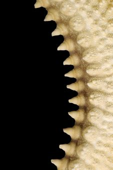 Free Starfish Thorns Royalty Free Stock Image - 8441306