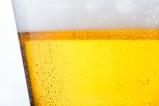 Free Cold Beer Royalty Free Stock Image - 8441466