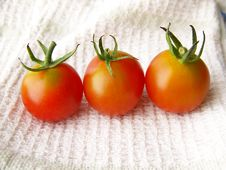 Free Tiny Tomatoes Stock Images - 8444364