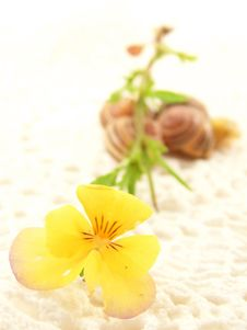 Free Yellow Flower On Crochet With Snail Shells Royalty Free Stock Photo - 8444375