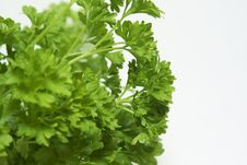 Free Bunch Of Parsley Isolated On White. Royalty Free Stock Photos - 8444528