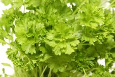 Free Bunch Of Parsley Isolated Royalty Free Stock Photography - 8444537