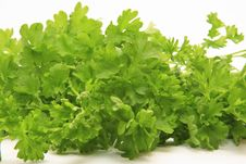 Free Bunch Of Parsley Isolated Royalty Free Stock Photo - 8444575