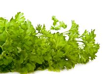 Free Bunch Of Parsley Isolated On White. Stock Photos - 8444633