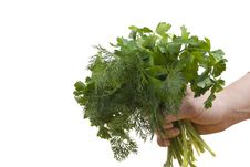 Free Parsley And Dill Royalty Free Stock Photography - 8446047