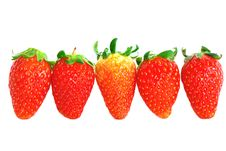Free Strawberry Series 17 Royalty Free Stock Photo - 8446365