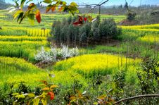 Free Pengzhou, China: Spring Sichuan Province Landscape Stock Photo - 8446530