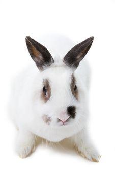 Free White Rabbit Stock Photos - 8446903