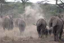 Free Herd Of African Elephants Royalty Free Stock Photography - 8448337