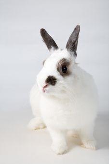 Free White Rabbit Royalty Free Stock Photo - 8448675