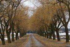 Free Trees Stock Photos - 8449173