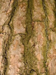 Free Tree Bark Royalty Free Stock Photo - 8449575