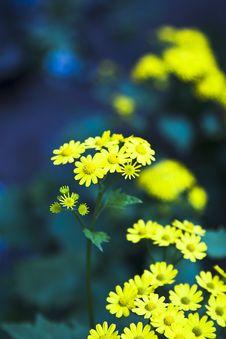 Free Flower Royalty Free Stock Image - 8449936