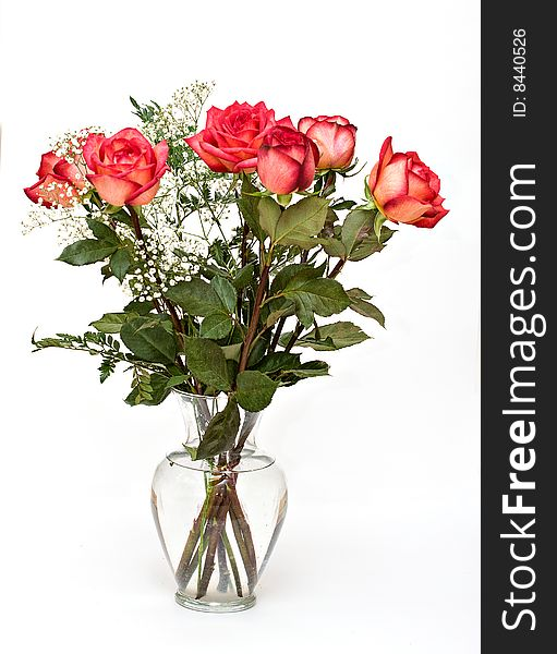Vase Of Roses Free Stock Images Photos 8440526