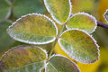 Free Leaves Stock Photo - 8450380