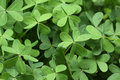 Free Clover Stock Images - 8457104