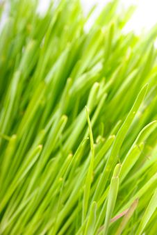 Free Grass 4 Stock Images - 8450424