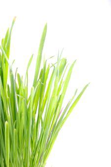Free Grass 6 Stock Photo - 8450470