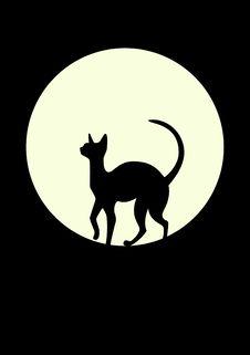 Free Black Cat Stock Photo - 8450520