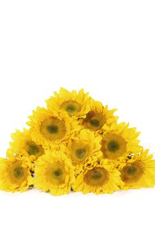 Free Sunflower Stock Photography - 8452842