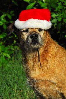 Dog Christmas Stock Images
