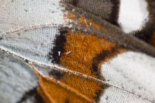 Free Butterfly Wing Stock Photo - 8453630