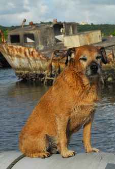 Free Wet Dog On Boat Stock Photo - 8453750