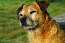 Free Dog Royalty Free Stock Image - 8454096