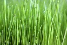 Free Green Grass Royalty Free Stock Images - 8454579
