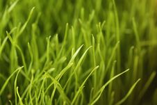 Free Green Grass Stock Photo - 8454610