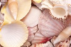 Free Seashells In Closeup Royalty Free Stock Photography - 8454837