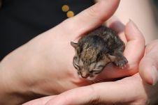 Free Newborn Kitten Stock Image - 8456811