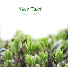 Free Spring Green Royalty Free Stock Photography - 8458617