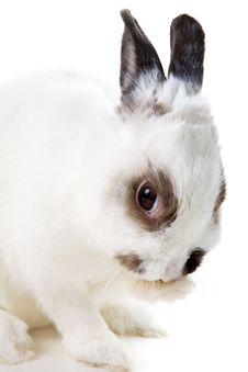 Free White Rabbit Stock Photos - 8459393